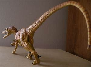 Velociraptor (Safari Ltd) – Dinosaur Toy Blog  Velociraptor