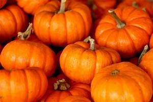 Pumpkins, Stacked, Free, Stock, Photo