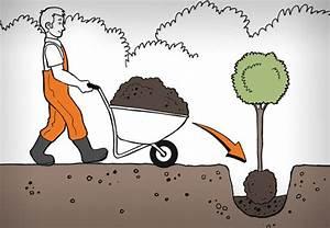 Baum Pflanzen Anleitung : b ume pflanzen in 6 schritten anleitung von obi ~ Frokenaadalensverden.com Haus und Dekorationen