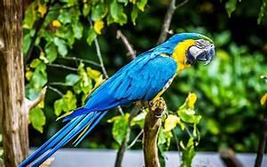 Tropical Bird Macaw Parrot Hd Wallpaper 74920 : Wallpapers13.com  Bird