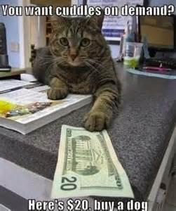 cat jokes for top 10 cat jokes for adults collection world