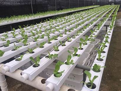 Hydroponic Nft Pvc Channel Systems Growing Vegetable