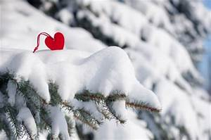 Winter Love - Winter & Nature Background Wallpapers on ...