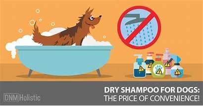 Shampoo Dry Dogs Dog Convenient Safe