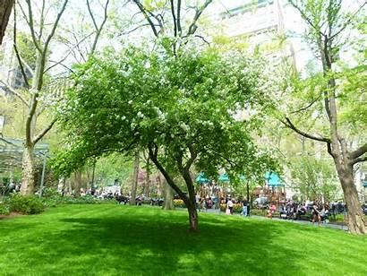 Arbor Tree Trees Tour Square Park Calendar