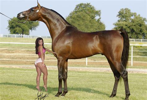 horses biggest strongest canvids