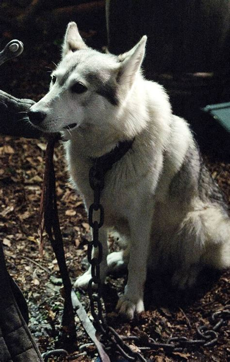 direwolf lady stark thrones game eddard sansa names season wolves nymeria ghost summer grey direwolves wind snow hbo named shaggydog