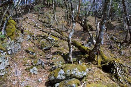斜面の緩い湿気の多い所には苔が豊富