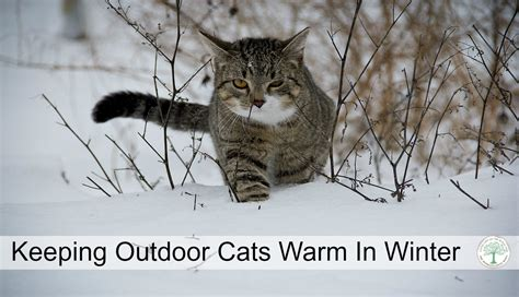 how to keep outdoor cats warm in winter