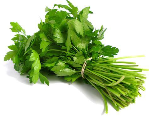 plante aromatique mettez du go 251 t dans votre int 233 rieur