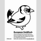 Goldfinch Coloring European Pages Birdorable American sketch template