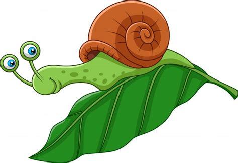 Snail Vectors, Photos And Psd Files