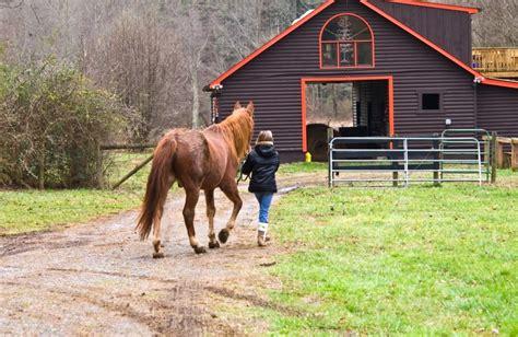cost    horse wonderopolis