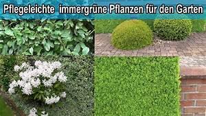 Sichtschutz Pflanzen Pflegeleicht : immergr ne hecken pflanzen f r den garten winterharte ~ A.2002-acura-tl-radio.info Haus und Dekorationen