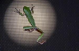 Fliegengitter Mit Rahmen : fliegengitter mit rahmen perfekter schutz vor insekten ~ A.2002-acura-tl-radio.info Haus und Dekorationen