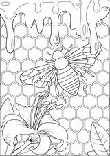 Colorare Hive Insects Insect Insectos Insetti Insekten Farfalle Schmetterlinge Adulti Malbuch Justcolor Arwen Insectes Taste Abeille Honig Biene Inse Bienenstock sketch template