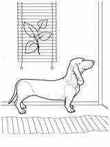 Dachshund Coloring Pages Dogs sketch template
