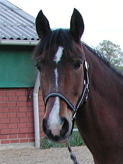 wwwhadelnet reitertreff haltung pferdesprache