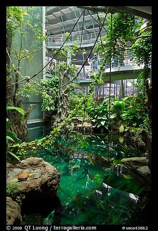 picturephoto  rainforest dome  flooded forest