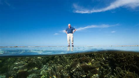 David Attenborough's Great Barrier Reef  Cbc Documentaries