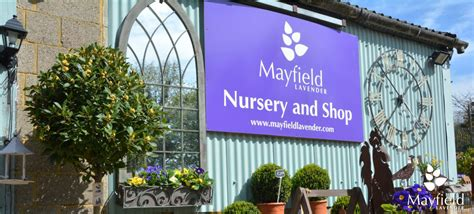 mayfield lavender organic lavender growers on the surrey downs