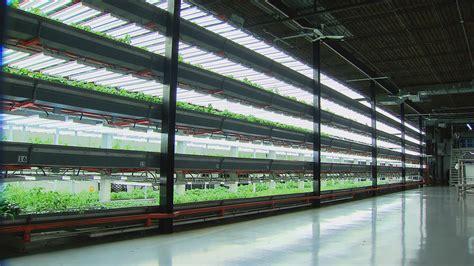 indoor vertical garden humboldt park farm raises fresh fish greens in once