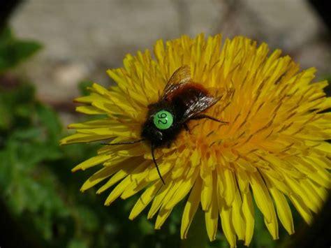 Botanischer Garten München Bienen by Forschungsprojekt Im Botanischen Garten Zum Flugverhalten
