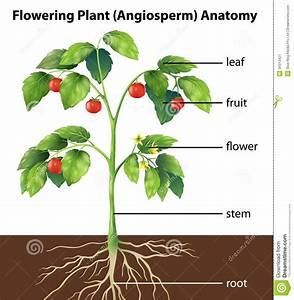 Diagram Of Where Are The Parts Of A Plant