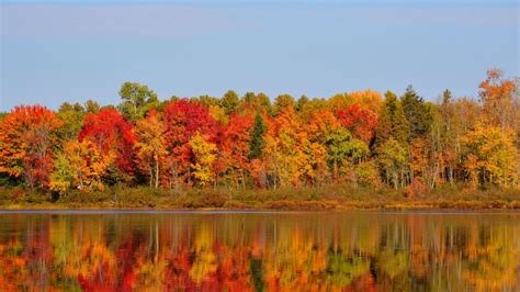 Fall colours about to peak in Algonquin Park, Muskoka ...
