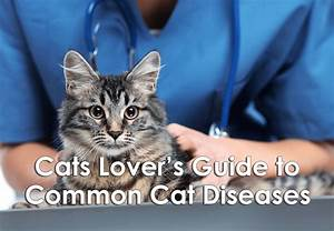 Cat Lover U0026 39 S Guide To Common Feline Diseases  Infographic