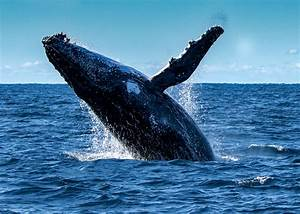 2018, Whale, Watching, Season, 7, Ways, To, See, The, Whales
