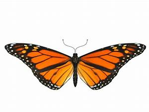 Monarch Butterfly Flying Clipart