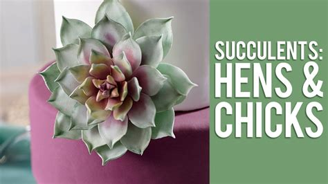 how to make gum paste how to make gum paste echeveria succulents youtube