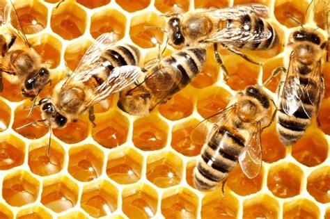 move  manuka health boosting nectar