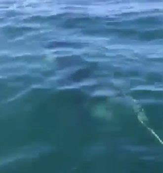 Orca Whale Attacks Fishing Boat In Alaska by Killer Whale Attacks Alaskan Fishing Boat And Makes Off
