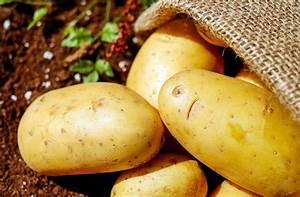 Kartoffeln Für Hunde : d rfen hunde kartoffeln essen ~ A.2002-acura-tl-radio.info Haus und Dekorationen