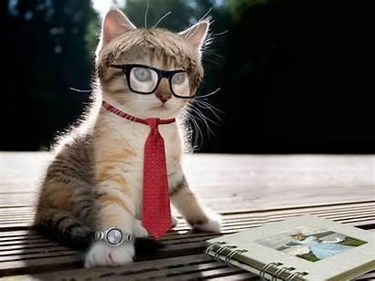 Stylish Kitten Cats Animals Wallpapers Cat Desktop