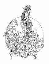 Peacock Colouring Grown Lostbumblebee Coloring Printable Pages Adult Detailed Advanced sketch template