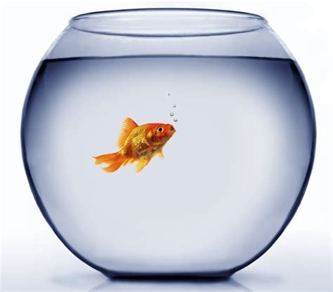 poisson bocal l atelier ressources humaines 174