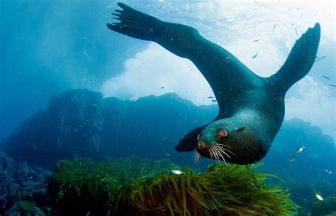 oceano animal livre oceana brasil