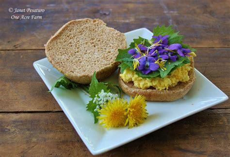 Foraging Garlic Mustard, An Edible Invasive Plant