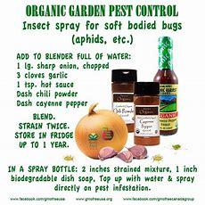 Organic Garden Pest Control Recipe Trusper