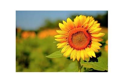Positive Energy Desktop Backgrounds Sunny Abstract Nectar