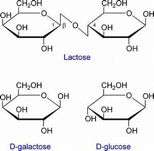 File:Lactose etc.png