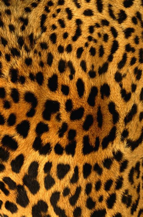 Animal Skin Wallpaper - leopard skin wallpaper wallpapersafari