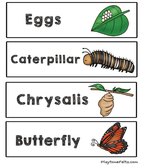 butterfly life cycle for preschool prep free butterfly cycle printables for preschool 818