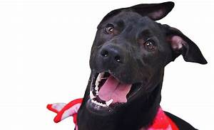 Humane Society of Genesee County : Home