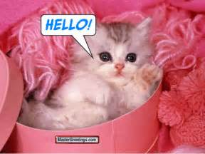 how to say cat in cat say hello greeting picture