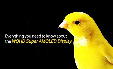 Everything You Need To Know About The Wqhd Super Amoled
