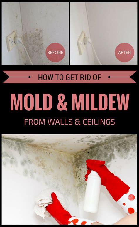 rid  mold  mildew  walls  ceilings